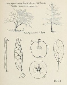 "Drawing trees, from the public domain book, ""The tree folk (1925)."""