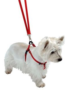Teach your dog to walk without pulling? With a Freedom No Pull Harness for dogs 12lbs up to 250 lbs.