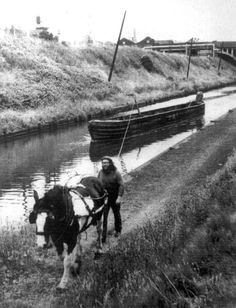 canal boat horse - Google Search