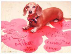 Be my Valentine!  http://wp.me/p27Fw1-Jt #dachshund #doxies #Valentine'sDay