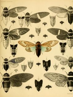 25+ Free Incredible Insects Vintage Printable Images