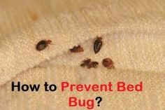 How to Kill Roaches Fast? Natural Spice, Natural Herbs, German Cockroach, Rid Of Bed Bugs, Borax Powder, Baking Soda Water, Room Freshener, Types Of Herbs, Small Insects