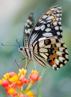 #Wow#Butterflies#Moths