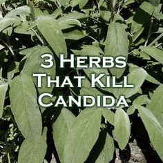 3 Herbs That Kill Candida