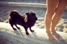 Dog Beach by albert law, via Behance