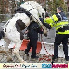 Atın intikamı... #gecealışverişi #at #intikam #tecavüz #oha #çüş #abaza #caps #komik #resim #çokkomik #resimler #fotoğraf #cinsel #cinsellik #yetişkin #perşembe
