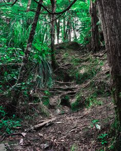 Using tree roots as stairs to get up the hill Tree Roots, Stairs, Plants, Stairway, Staircases, Plant, Ladders, Planets