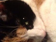 My cat Nessie