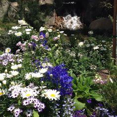Matterhorn in bloom #disneyland by anna_ventura55