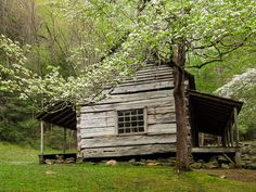 Cabin and Dogwood | Flickr - Photo Sharing!