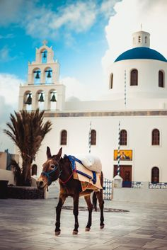 Mule in Oia, Santorini, Greece