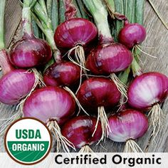 via BKLYN contessa :: Heirloom Onion Seeds - Organic & Non-GMO Onion | Seed Savers Exchange