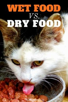 Wet Food vs Dry Food - What Does Your Cat Need and When The best way to figure it out which one is right for your cat is to know the pros and cons of each and how they can affect your cat s diet oliveknows wetfood dryfood catfoodtips bestcatfood cats Healthy Cat Food, Best Cat Food, Dry Cat Food, Homemade Cat Food, Cat Diet, Cat Insurance, Cat Care Tips, Outdoor Cats, Cat Behavior