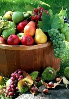 The Best 20 Garden Decoration Ideas Of 2019 Fruit And Veg, Fruits And Vegetables, Fresh Fruit, Colorful Fruit, Exotic Fruit, Fruits Photos, Fruit Picture, Fruit Decorations, Fruit Stands