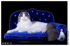 Картинки по запросу шикарные диваны для кошек и собак