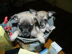 Bucket Puppies