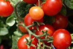 Vertical Rose Gardening 5 veggies for vertical gardening. Potager Garden, Herb Garden, Growing Tomatoes, Urban Farming, Perennials, Flora, Herbs, Vegetables, Flower Gardening