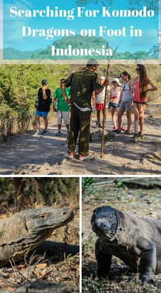 Walking with the Komodo Dragon in Indonesia. There are only two places on this planet where Komodo dragons exist in the wild. We had boarded a plane from Bali, flew over an erupting volcano to the island of Flores in Eastern Indonesia. From this location our journey to the land of the dragons would begin. Click to read more at http://www.divergenttravelers.com/walking-komodo-dragon-indonesia/