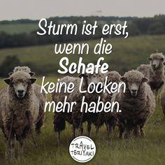 Sturm ist erst, wenn die Schafe keine Locken mehr haben.