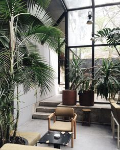 Sun room | garden room inspiration | full height black metal framed windows | tall palms | Concrete interiors and indoor plants at Café Vitória, Portugal, captured by Acanthus Magazine