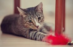 7 Cat Toy Dangers You Should Know | petMD