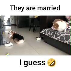 I wonder what he did lol😂maybe ate her dog biscuit lol. He's gonna have to get her two now lol! Funny Dog Memes, Funny Animal Memes, Funny Animal Videos, Cute Funny Animals, Funny Animal Pictures, Cute Baby Animals, Funny Cute, Cute Dogs, Funny Videos Of Dogs