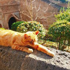그라다나고양이는 전생에 나라를 구했대#스페인 #그라나다 #알함브라궁전의 #고양이일상 #세젤부 #gato #cat #spain #granada #granadacathedral #granadacat #innerpeace