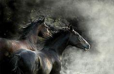 really nice photo... equine love