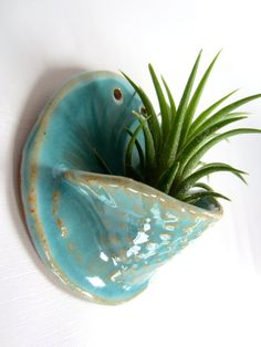 Air plant holder. Turquoise tllandsia pot. Hanging by HAWKHOUSE