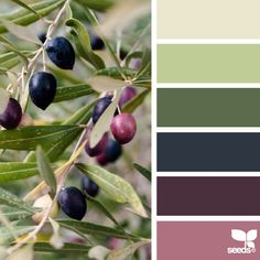 SnapWidget | today's inspiration image for { olive hues } is by @auntieclaras ... thank you Clara for generously sharing your incredible photos in #SeedsColor !