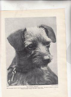 The Border Terrier/1937 British Dog Print/ by Museumofantiquepaper