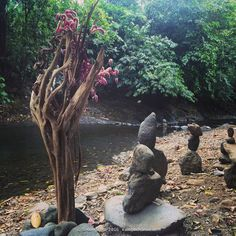 Inspired natural art made during a Kambo Cleanse retreat