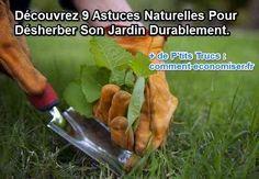 Voici 9 façons simples et naturelles pour tuer les mauvaises herbes de votre jardin sans pesticides.  Découvrez l'astuce ici : http://www.comment-economiser.fr/9-facons-naturelles-de-tuer-les-mauvaises-herbes.html?utm_content=buffer31b47&utm_medium=social&utm_source=pinterest.com&utm_campaign=buffer