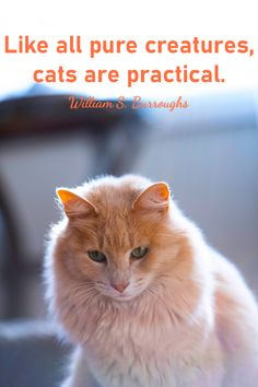 #catquotes #catquote #cat #cats #catlover #catlovers #catlove #catlife #catloversclub #catslover #crueltyfreeblogusa Cat Love Quotes, Cat Life, Cat Lovers, Creatures, Kitty, Pure Products, Cats, Little Kitty, Gatos