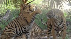animal sauvage Animated GIFs and Images