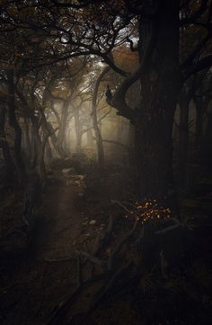 Opalescent Dream - Transient Forest - Alexandre Deschaumes