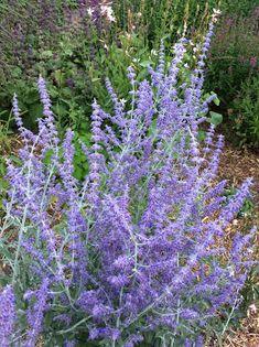 Planten voor een tuin op droge grond Farmhouse Garden, Edible Garden, Garden Inspiration, Garden Landscaping, Perennials, Home And Garden, Bloom, Exterior, Landscape