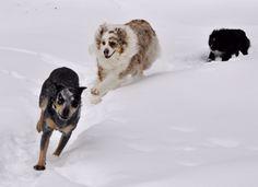 Dog Boarding Grand Lake Colorado Dog Boarding Rocky Mountain NationL Park