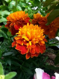 ♡ Marigold, Pets, Pictures, Nature, Photos, Naturaleza, Nature Illustration, Off Grid, Grimm