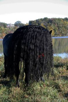 this_horse_might_have_the_worlds_most_fabulous_mane_640_09