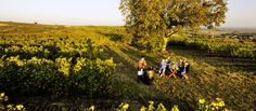 Impressionen aus dem Weinviertel Austria, Vineyard, Outdoor, Tours, Hiking, Wine, Outdoors, Vine Yard, Vineyard Vines