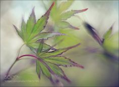 JL (teofil) #ILCE-6300 #macro #photo #insect #nature