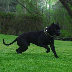 her giant dog companion Vantablack (♂)