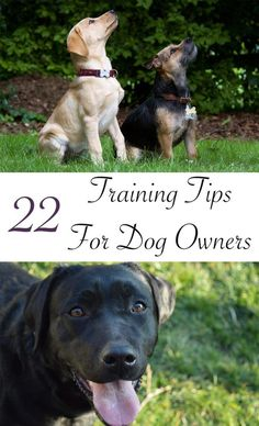 Top dog training tips to help you improve your Labrador's behavior.