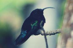 Les colibris s'envolent…
