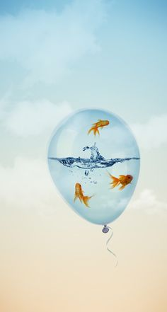 Fish swimming in water, inside a balloon