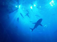 is that a shark I see? The ocean tunnel at The Deep in Hull