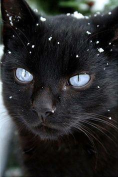 Hey guys...it's snowing outside.