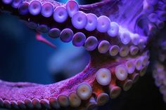 Tentacles by rodrigo ojeda, via Flickr