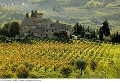 tuscany italy | Italy, Tuscany, Chianti, Vineyard. [197SCA00043] > Stock Photos ...